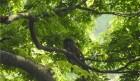 덕산도립공원서 멸종위기 수달 등 1516종 확인