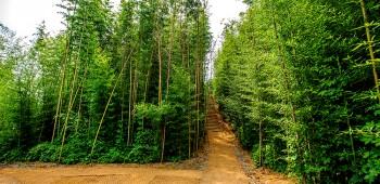 힐링의 명소로 해미읍성 대나무숲 부상!