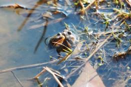 경칩(3. 5.)에 겨울잠에서 깨어난 개구리