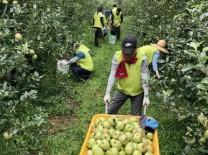 서산시 직원 및 농협서산시지부 태풍 피해 복구 일손돕기